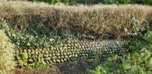 "Restoration and rebuilding ""The Secret Garden"" Flint Wall"